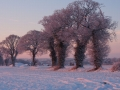 Highly Commended - Bernie Webb - Snowy Dawn