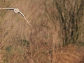 2nd Prize - Norman Wyatt - Barn Owl