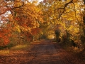 Public Choice 2nd Prize - Bernie Webb - Road to Wheatfen