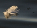 2nd Prize - Floating Feather - Norman Wyatt