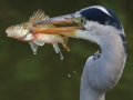 Public Choice 2nd Prize - Catch Of The Day - Norman Wyatt