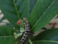 Students Highly Commended - Caterpillar, Becky Orland