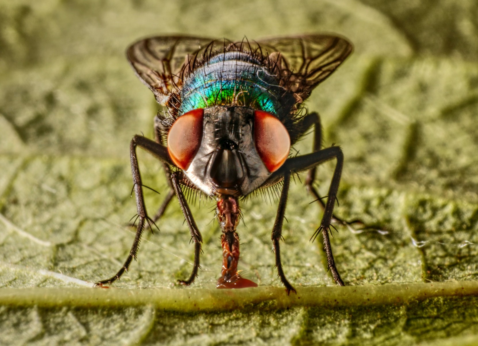 3rd Place - Fly's Eyes - Jonathan Orland