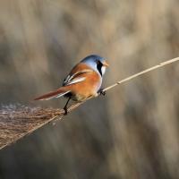 2nd Place - Balance Of Nature - Norman Wyatt